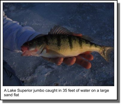 In search of the yellow perch ontario perch fishing for Yellow perch fishing secrets