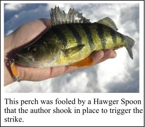 Ice fishing perch pointers ontario perch fishing for Ice fishing perch lures